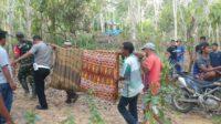 Petani Aceh Timur Meninggal Tersetrum Kabel Hama Babi di Kebunnya