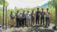 Petani Jagung Gampong Teuladan, Jatuh Bangun dan Bangkit Berkat Bantuan Pemerintah