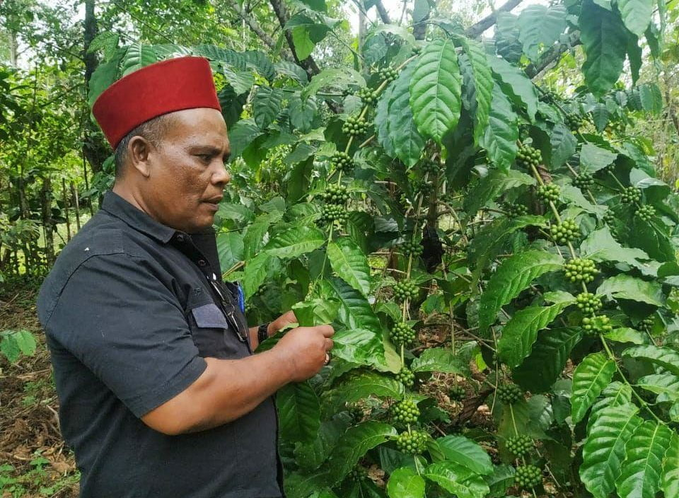 Abusyik Memantau Hasil Penyemprotan Pupuk Alam Organik di Geumpang