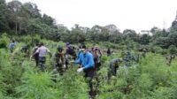 Tim Gabungan BNN Musnahkan 5 Hektar Ladang Ganja di Aceh Besar